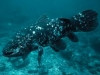 Coelacanth; Comoro Islands
